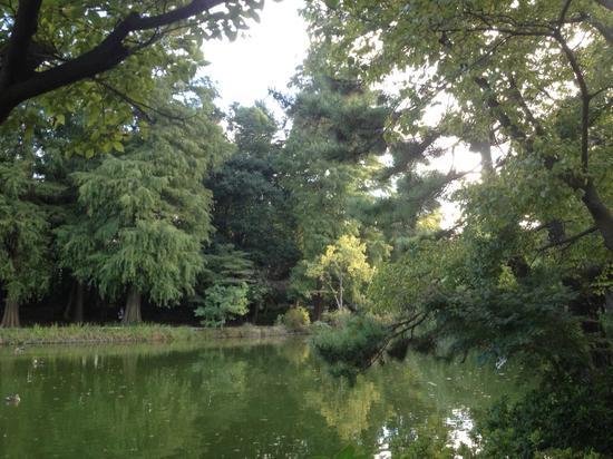 石神井公園池.jpg