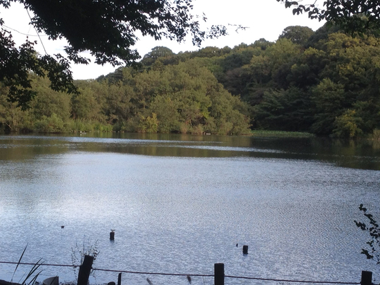 石神井公園風景.jpg